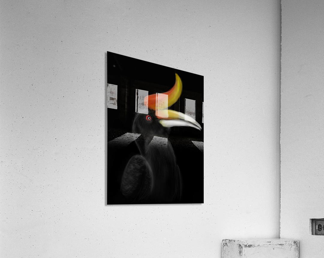 Rhinocerous Hornbill  Acrylic Print