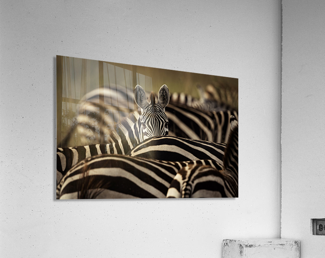 Between the Lines - Color by www.jadupontphoto.com  Acrylic Print