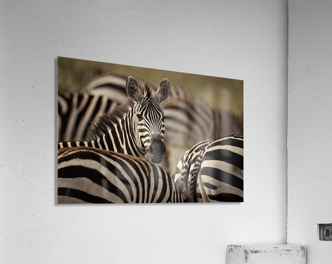 Who is there - color by www.jadupontphoto.com  Acrylic Print