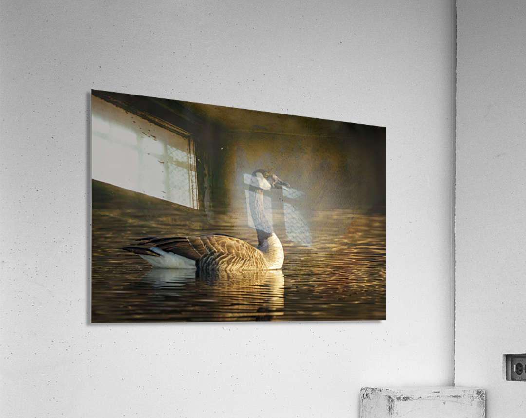_T8C4044  Acrylic Print