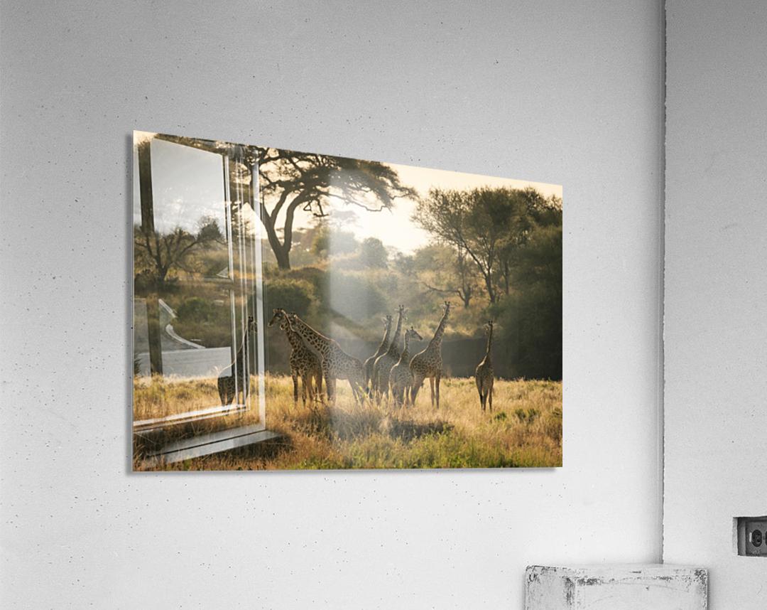 _49R8818  Acrylic Print