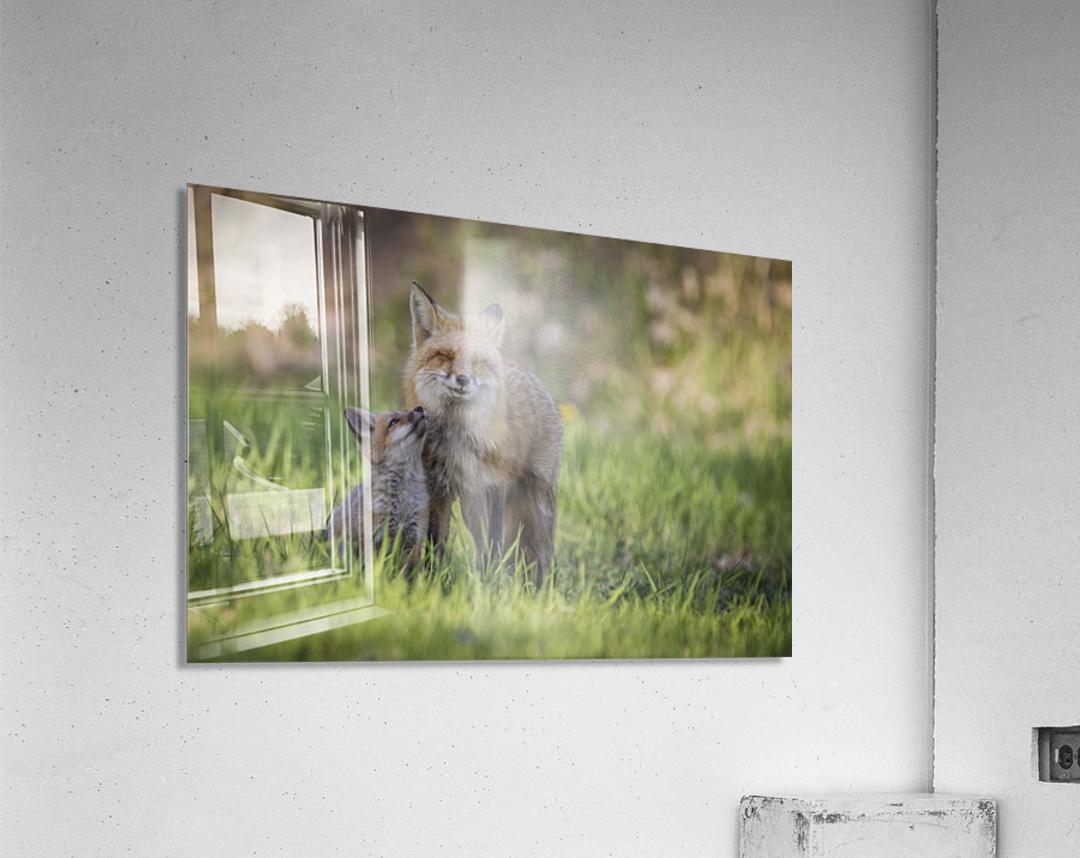 _T8C7860  Acrylic Print
