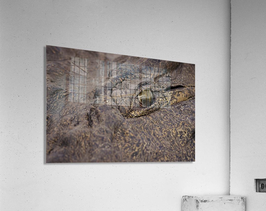 164A1267  Acrylic Print