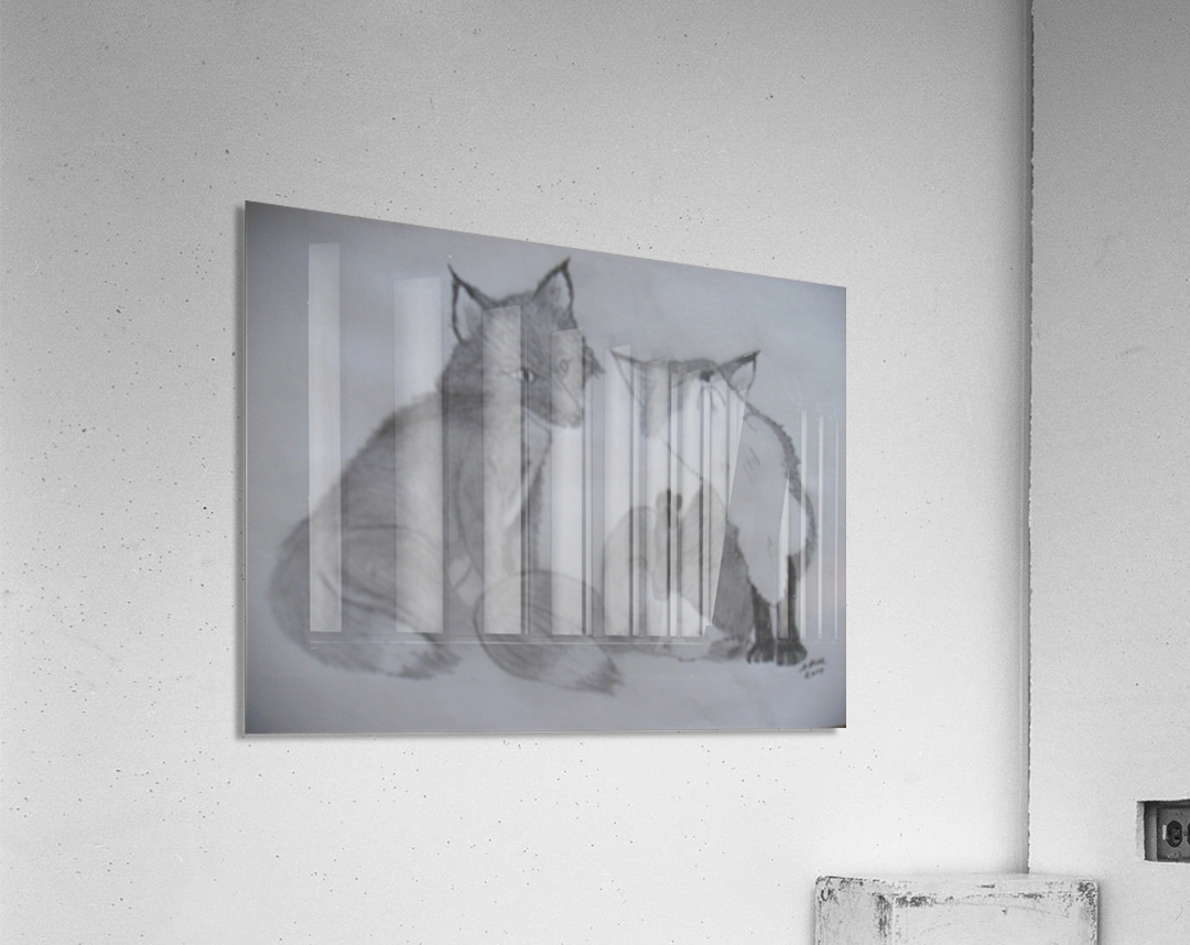 Fox Pair  Acrylic Print