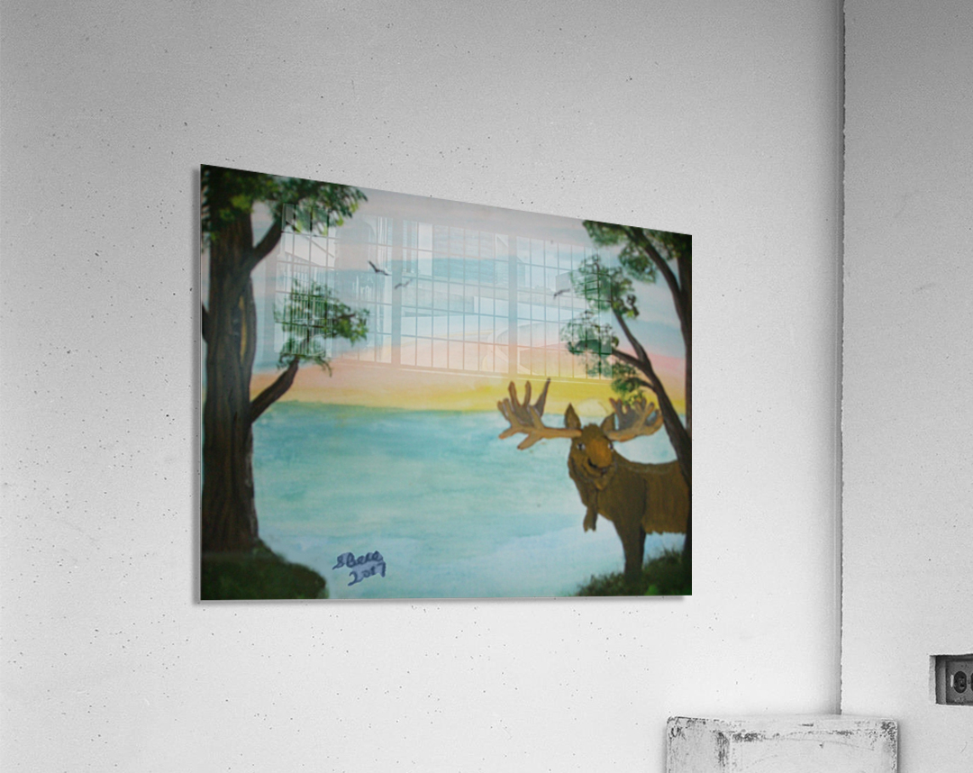 Maine Moose  Acrylic Print