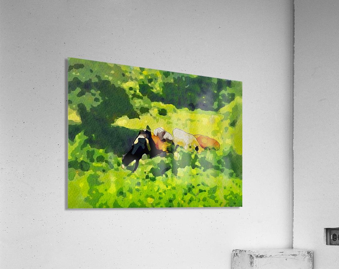 Cummington Cows  Acrylic Print