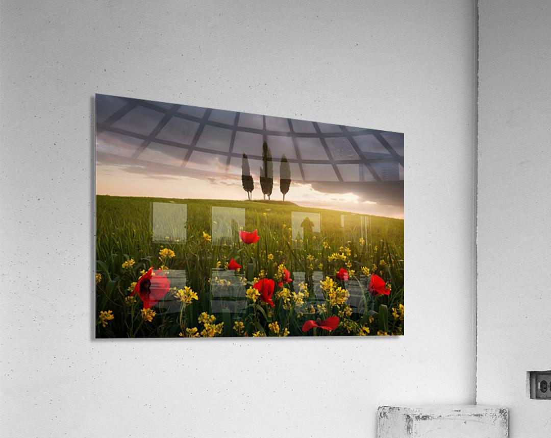 Blooming Tuscany  Acrylic Print