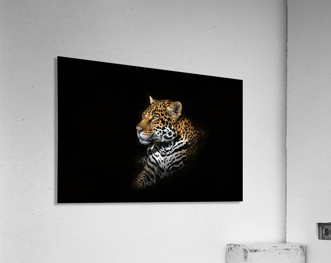 Jaguar Portrait  Acrylic Print