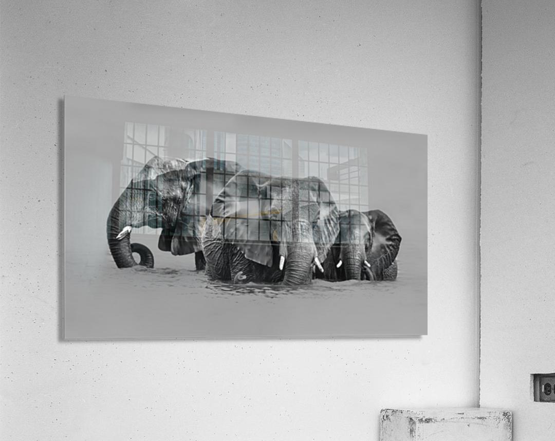 Elephant Crossing The River  Acrylic Print