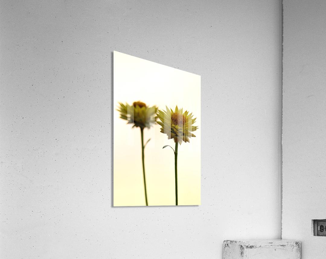Mellow yellow  Impression acrylique