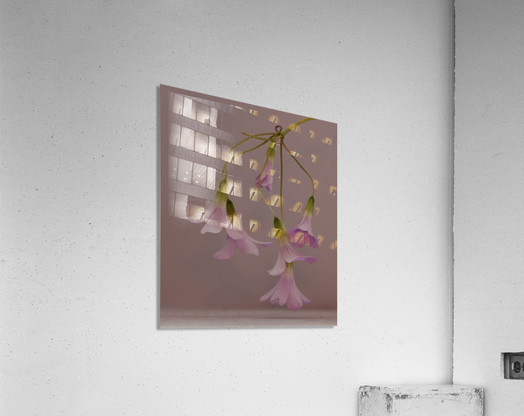 Pretty in pink  Impression acrylique