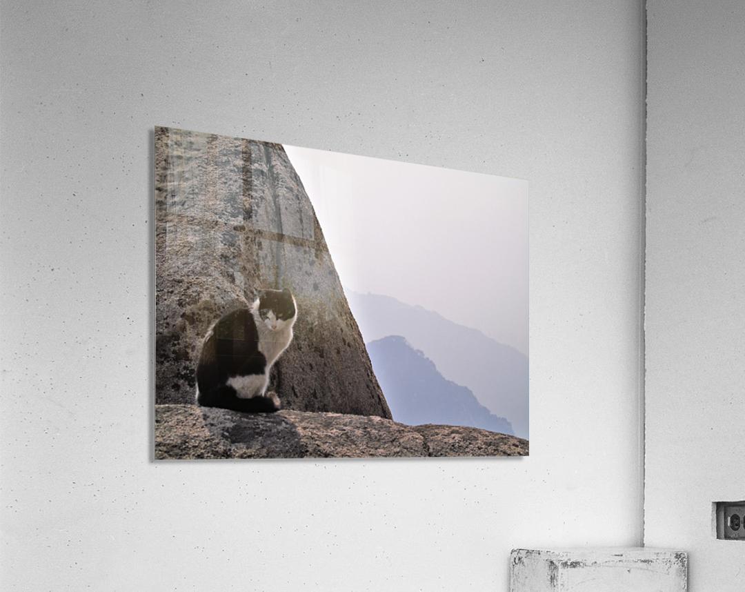 Mountain Cat  Acrylic Print