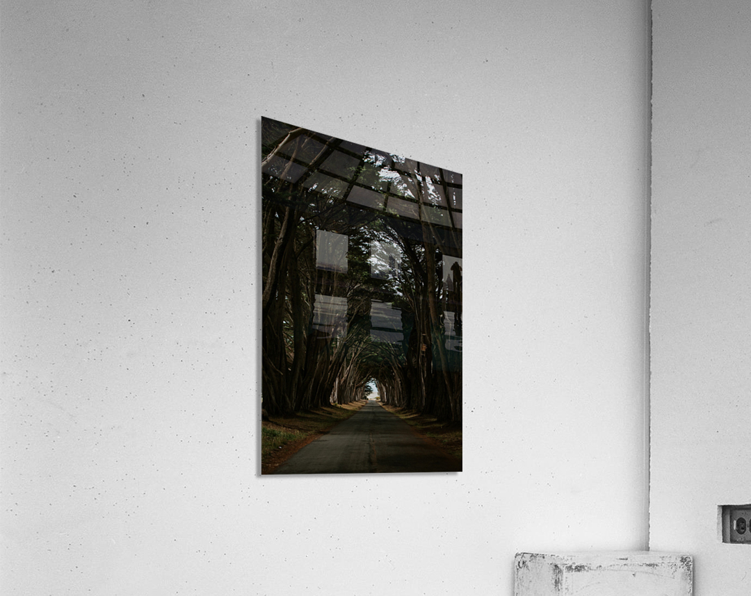 Cypress Tree Tunnel California  Impression acrylique