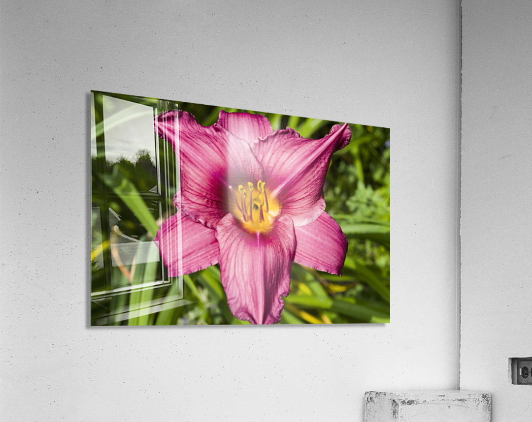 Purple Stella Doro Day Lily Flowers 2  Acrylic Print