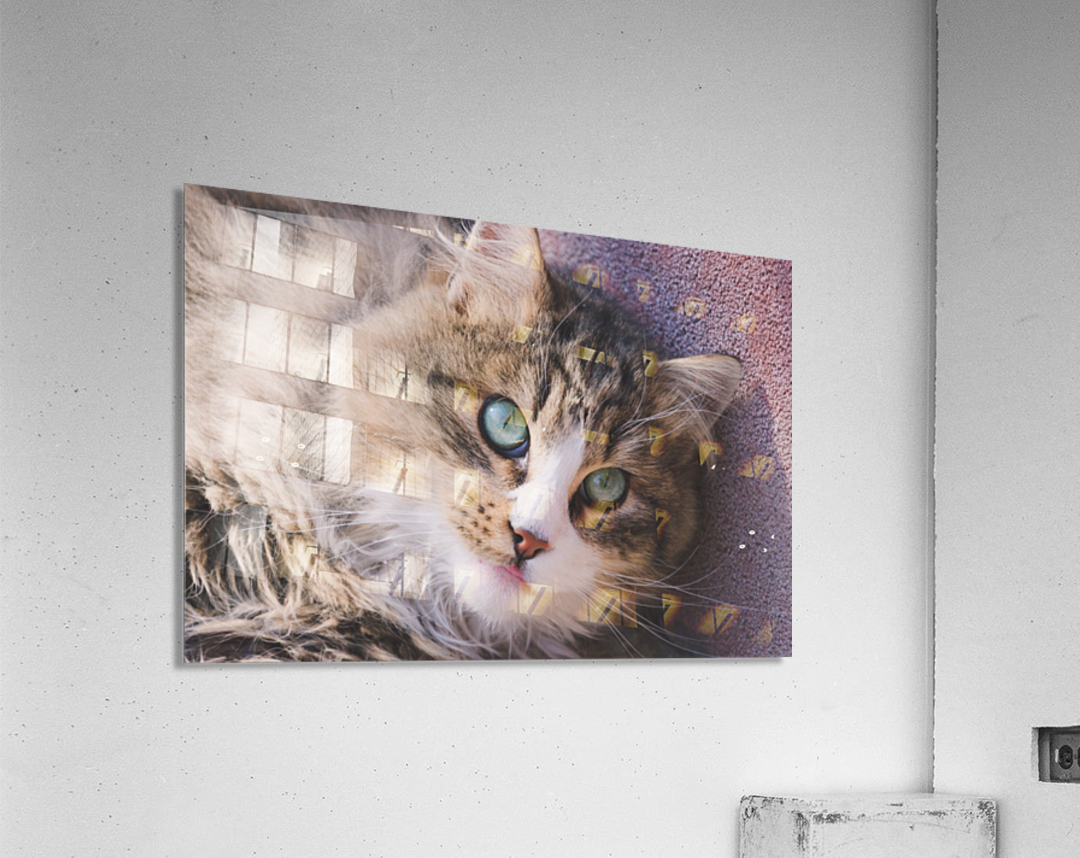 March Cat  Acrylic Print