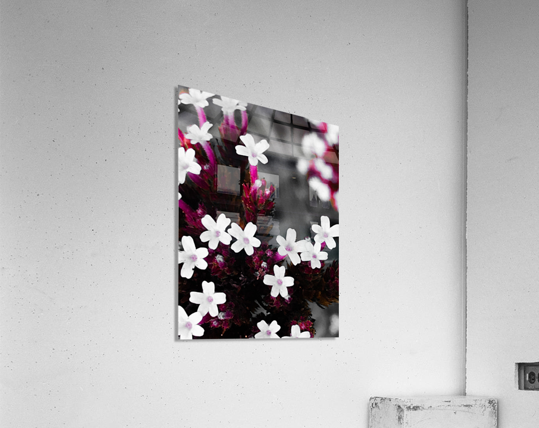White bloom  Impression acrylique