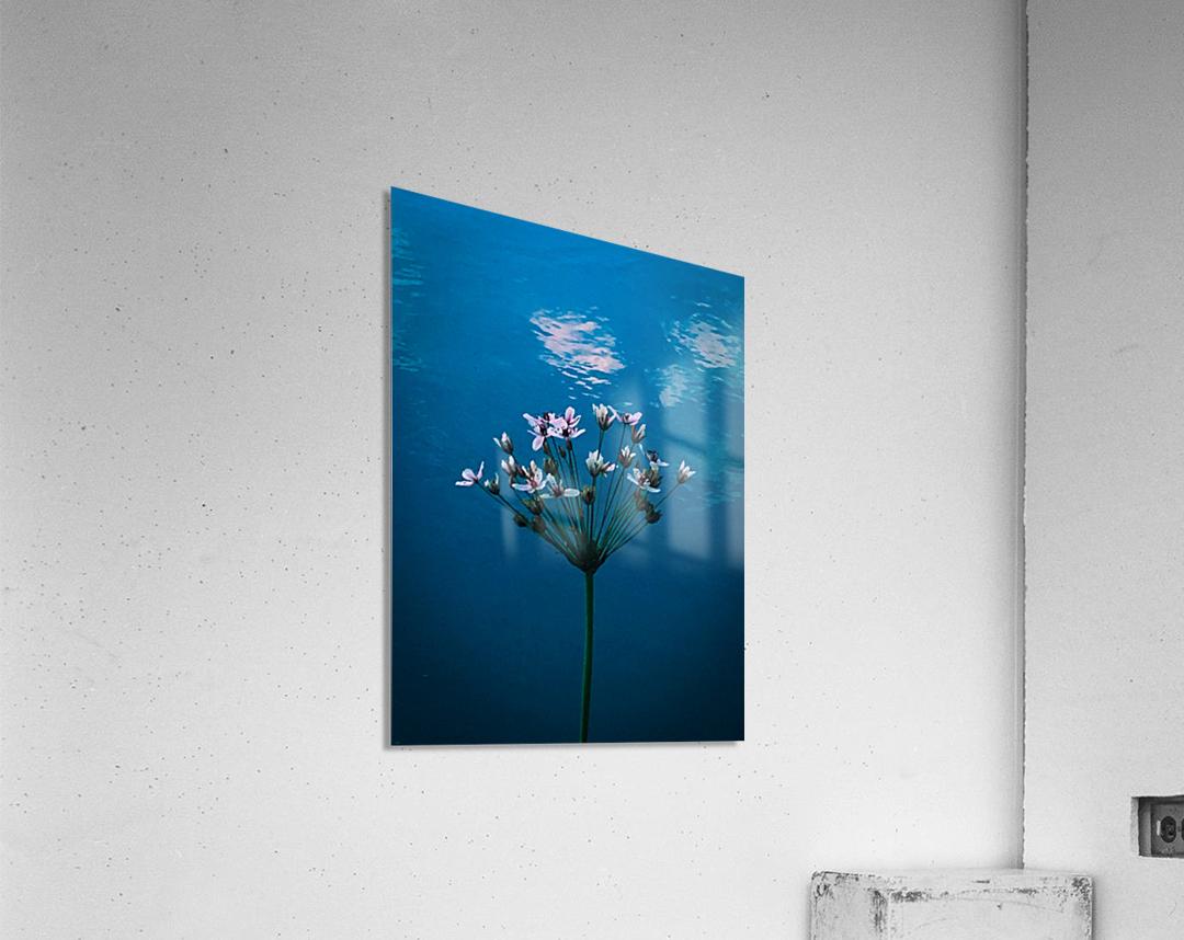 Accordance  Impression acrylique