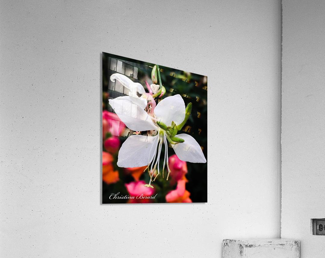 Close   Impression acrylique