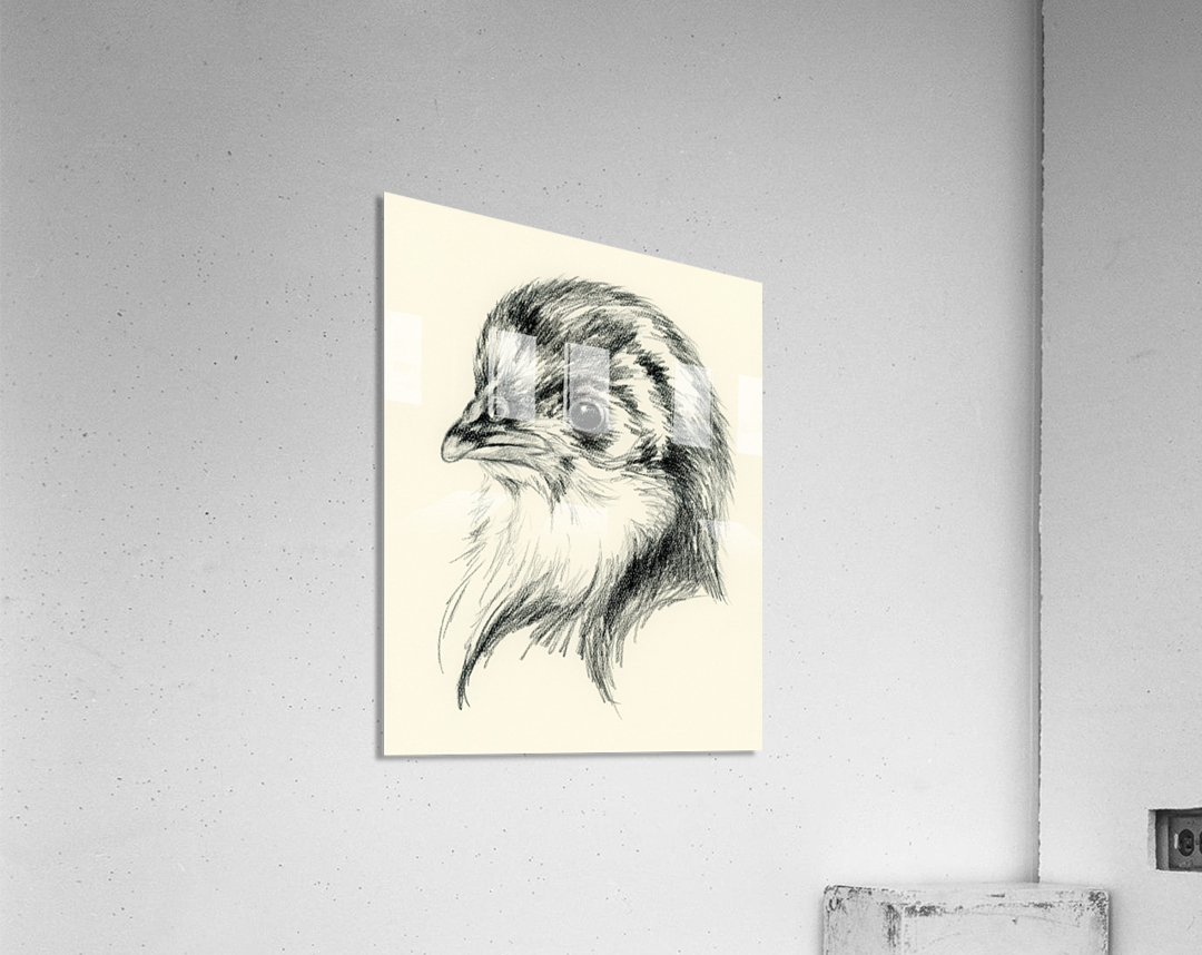 Black Australorp Chick in Charcoal  Acrylic Print