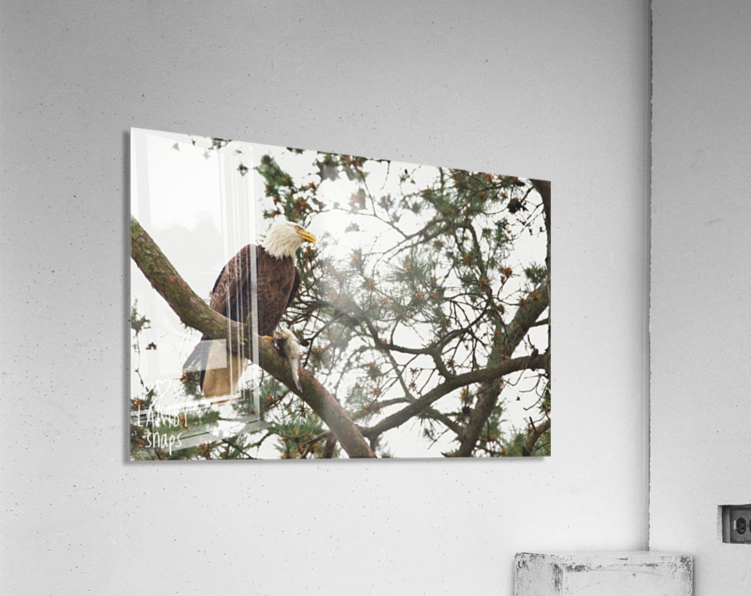 Eagles in Houston  Acrylic Print