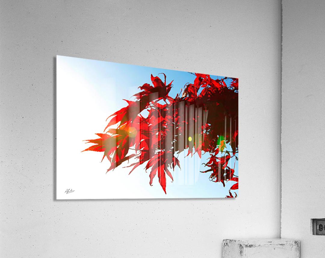 Chinese Maple  Acrylic Print