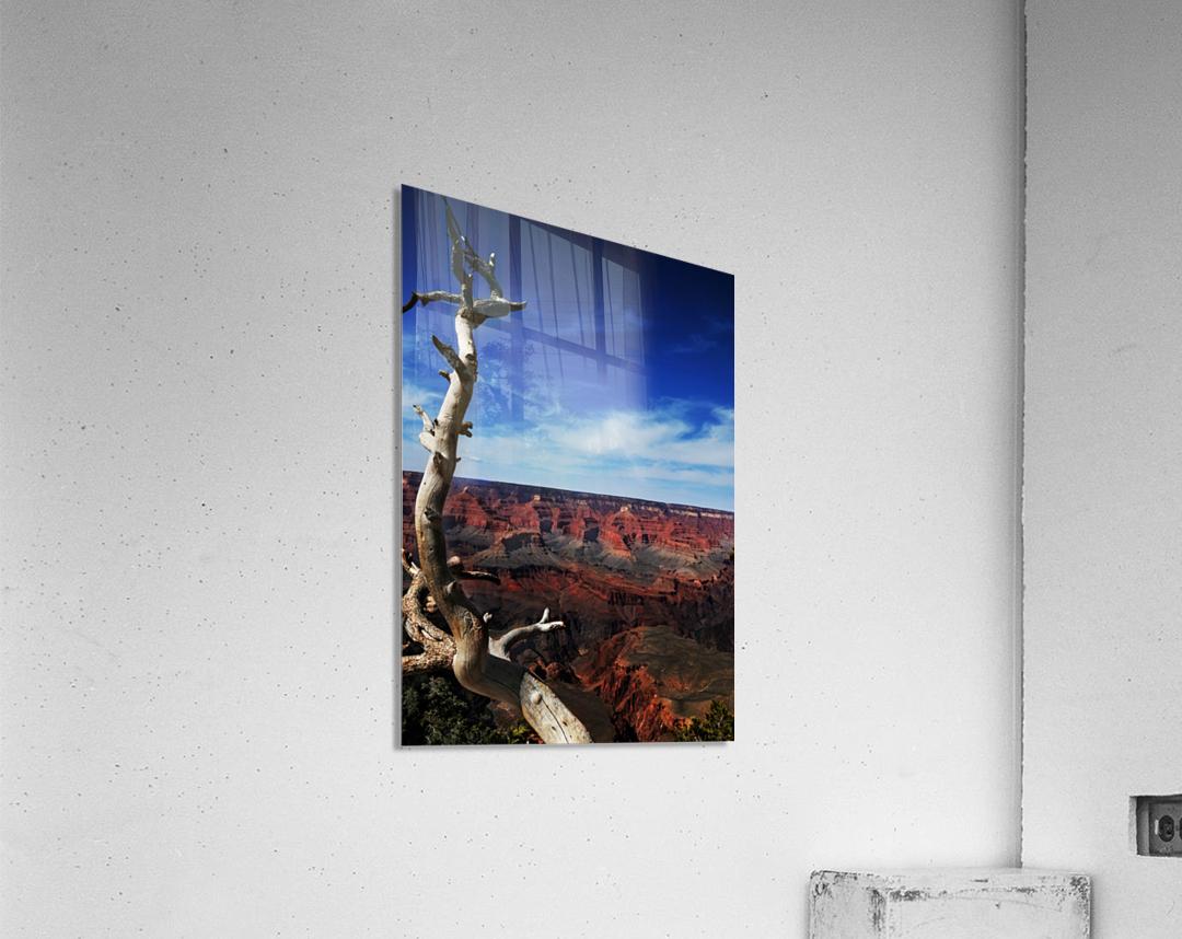 Grand Canyon framed by tree  Acrylic Print