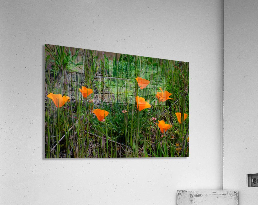 20190331 DSC_0762  Acrylic Print