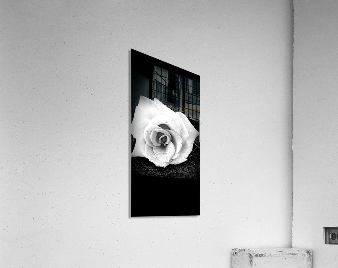20170826_101200  Acrylic Print