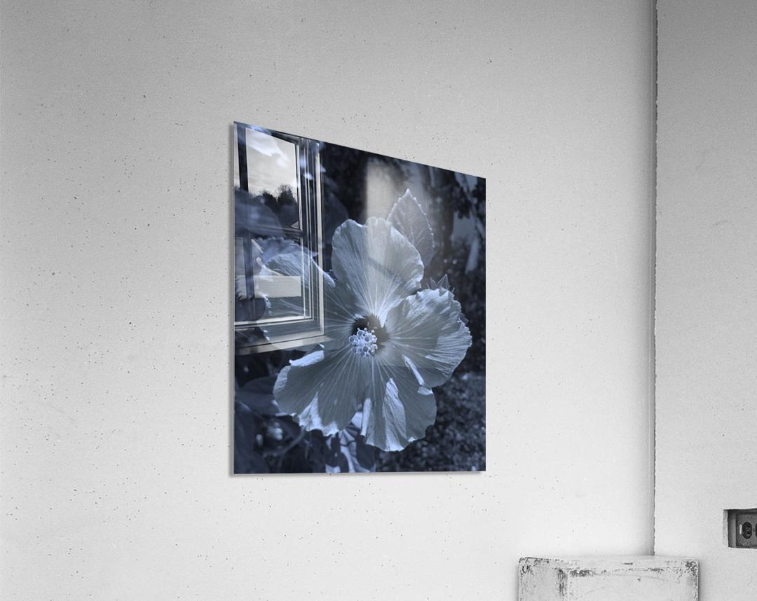 Screenshot_20190106 182135_Gallery  Acrylic Print