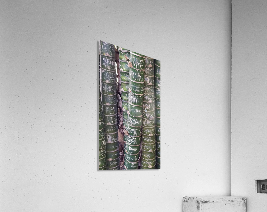 Bamboo Sign  Acrylic Print