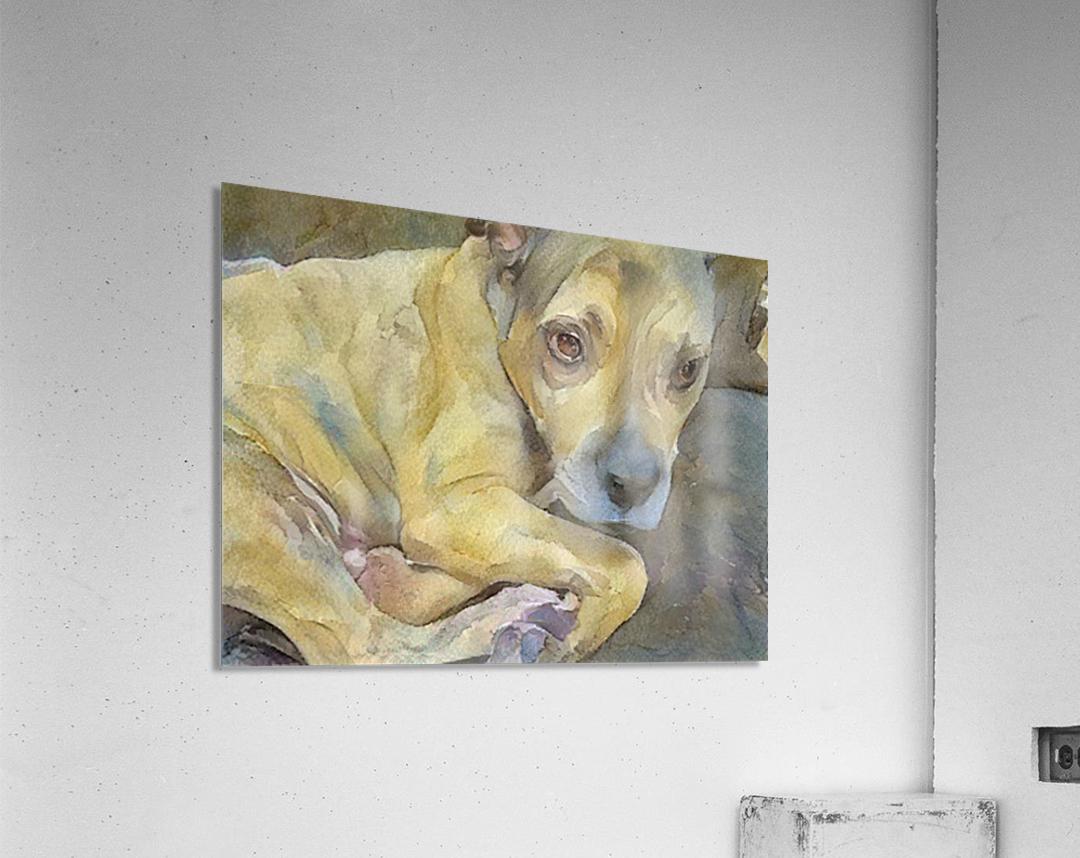Watercolor dog painting  Acrylic Print