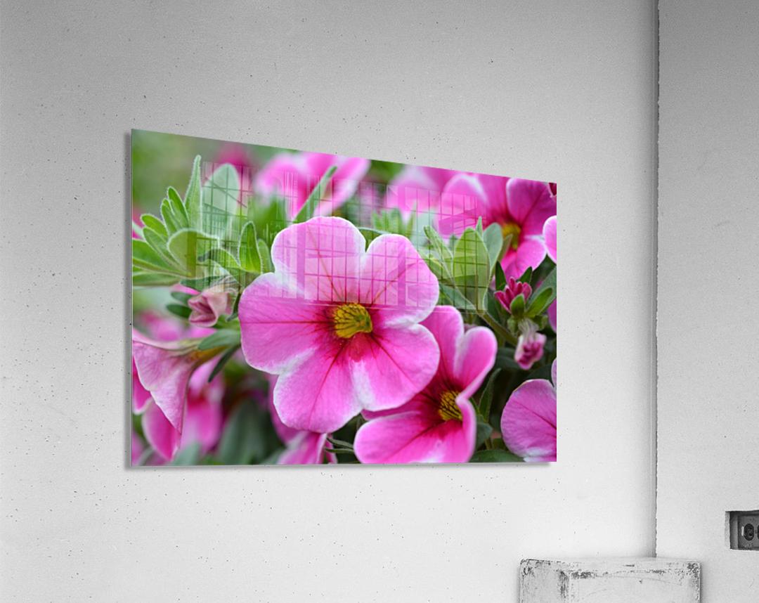 Pink Flowers Photograph  Acrylic Print
