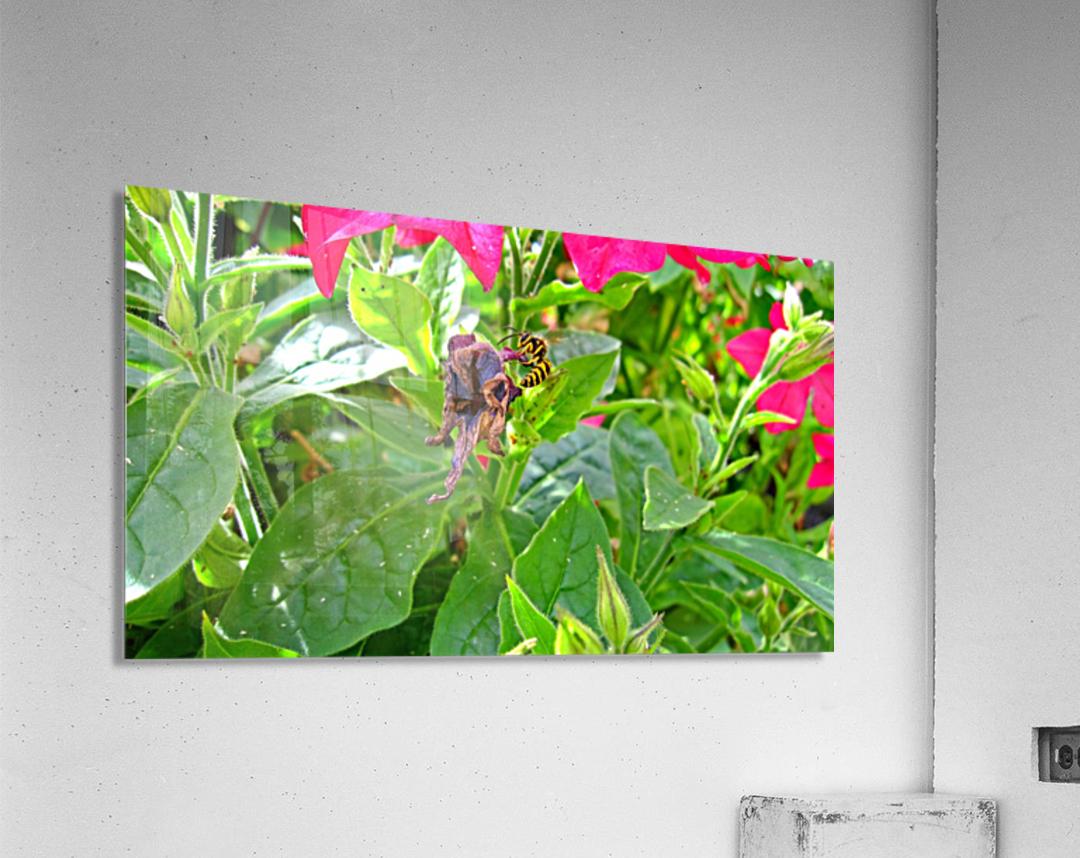 Bee (3)  Acrylic Print