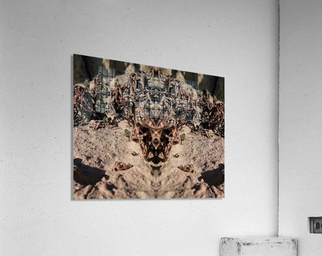 Ox  Acrylic Print
