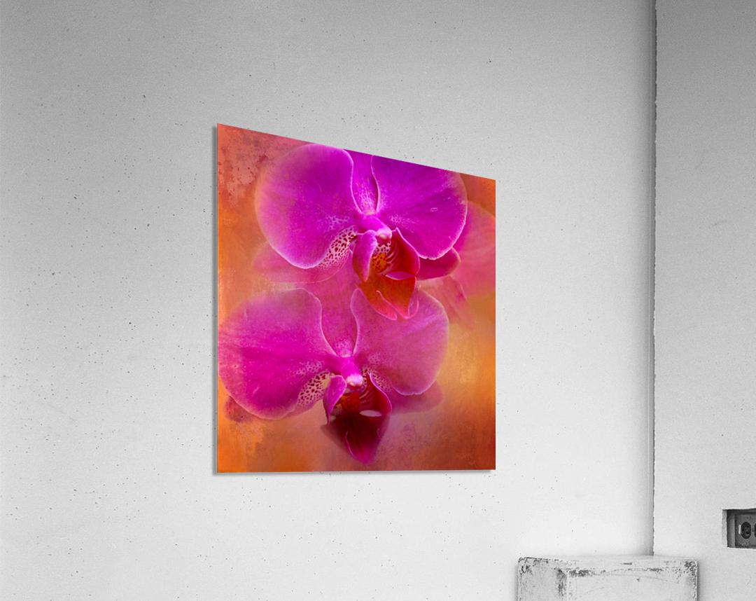 Colorful Phalaenopsis  Acrylic Print