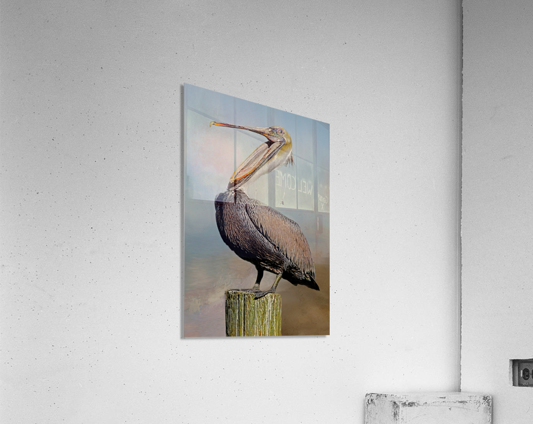 Belly Laugh-Brown Pelican   Acrylic Print