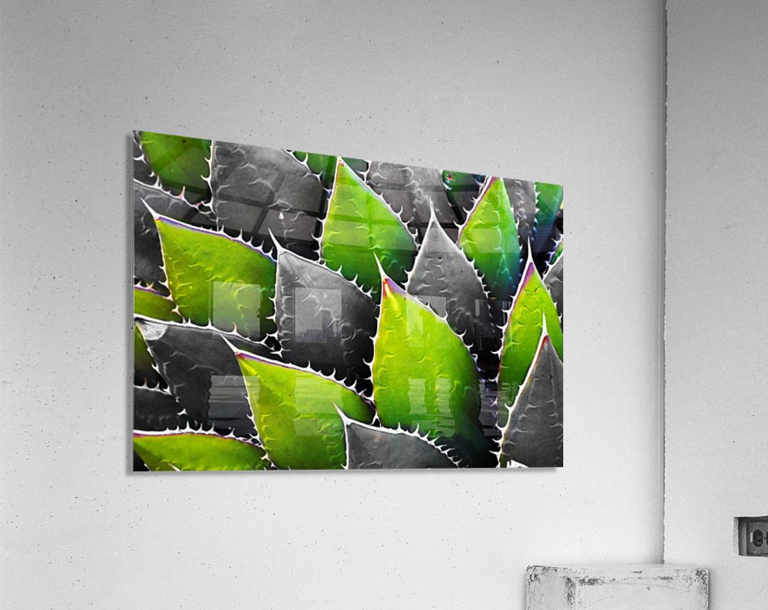 Thorny  Acrylic Print