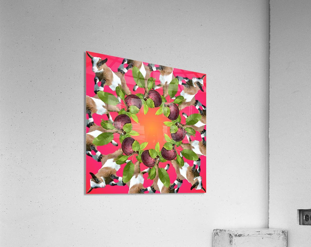 APPLE PICKIN -  Acrylic Print