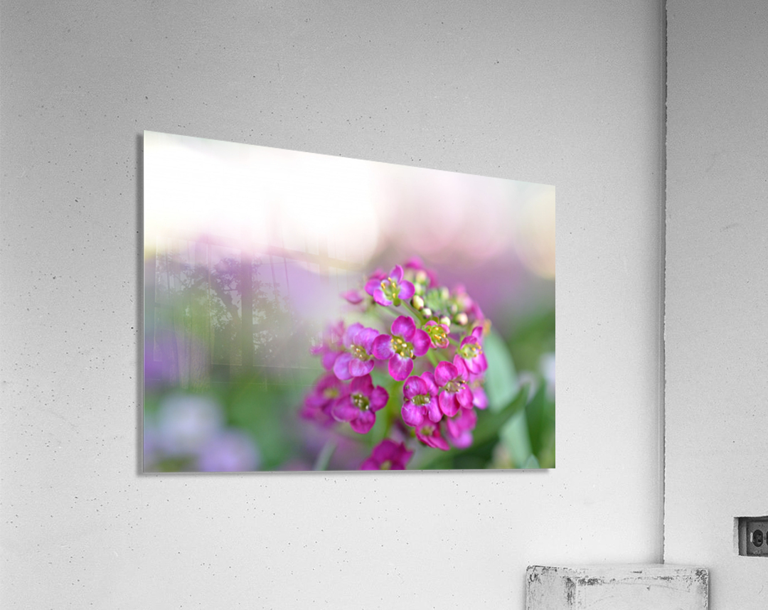 Pink Flowers Soft Photography  Acrylic Print