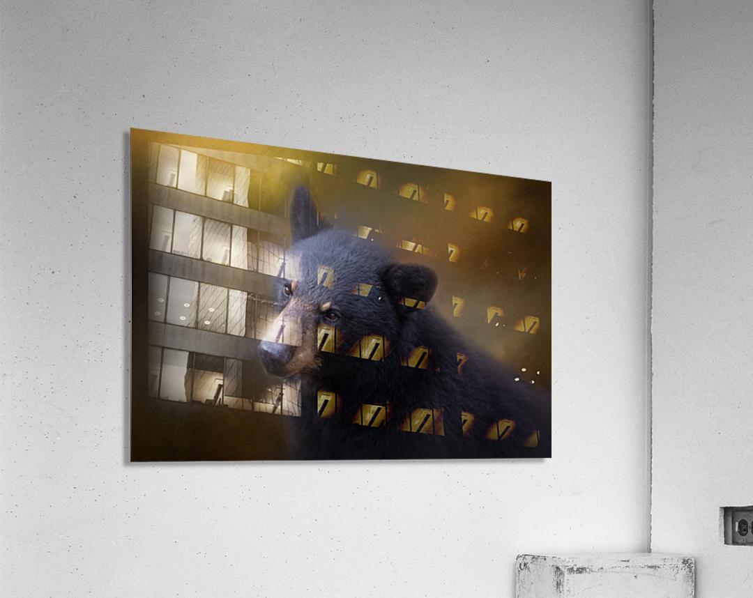 Black Bear Portrait  Acrylic Print
