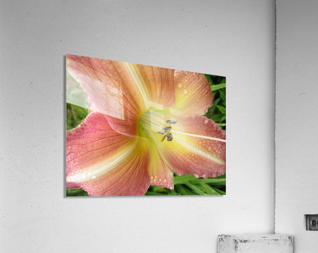 IMG_0437  Acrylic Print