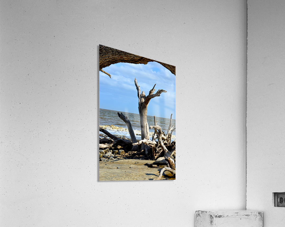Driftwood Beach Uplifting  Acrylic Print