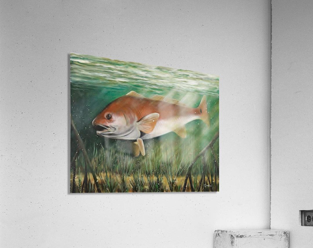 redfish  Acrylic Print