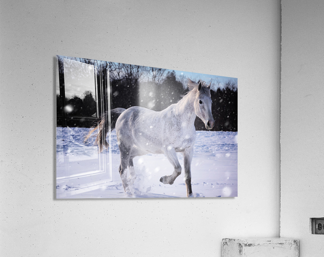 Horses in the Snow  Acrylic Print