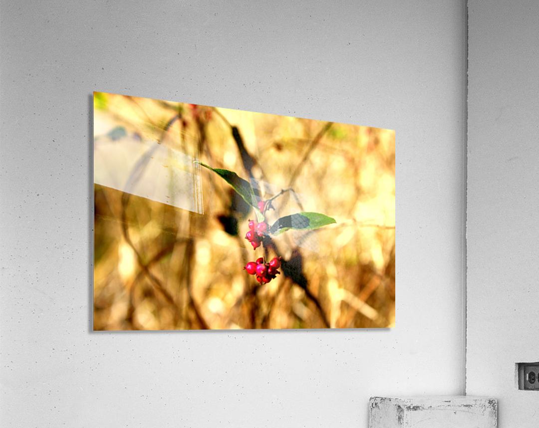 Fall Berries  Acrylic Print