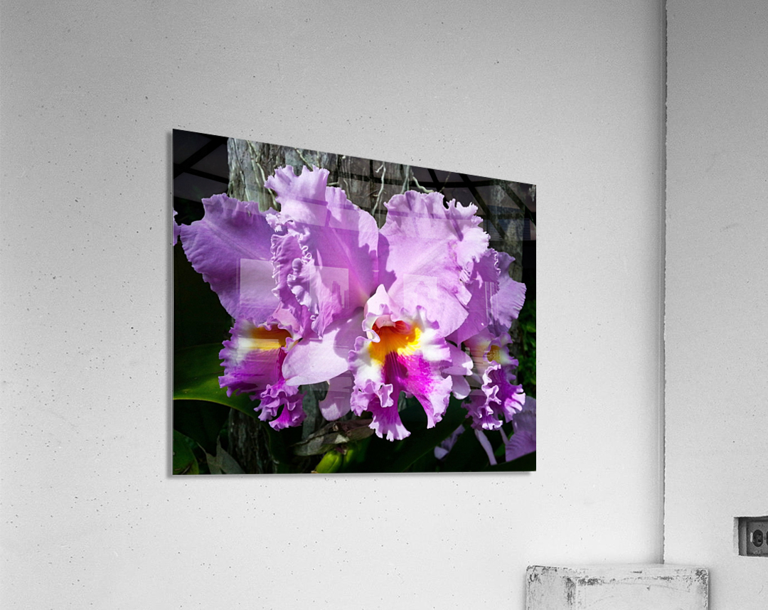 Frilly Orchid  Acrylic Print