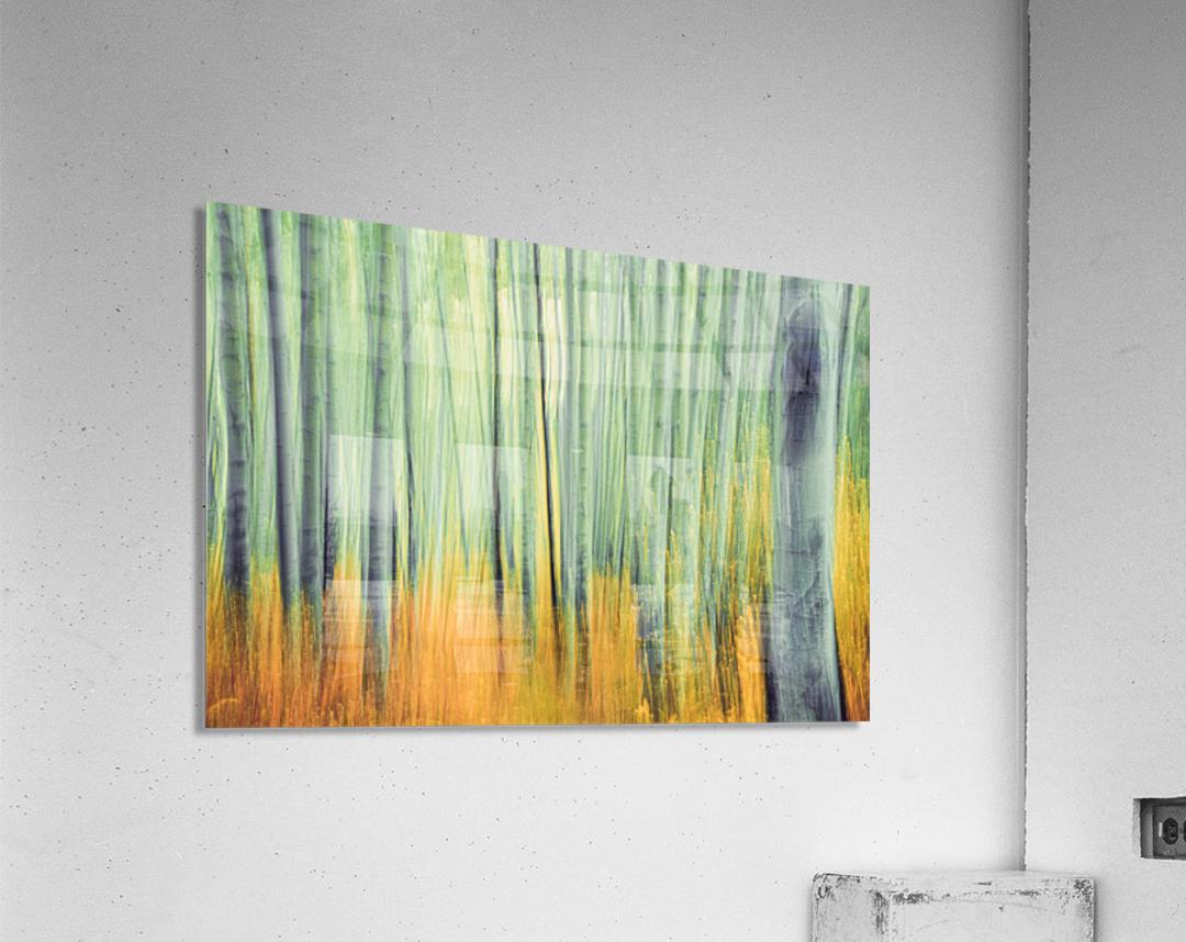 Aspen Trees in movement  Acrylic Print