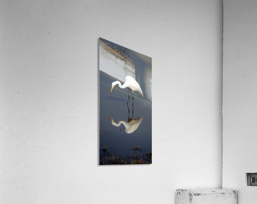 Who Are You White Egret  Acrylic Print