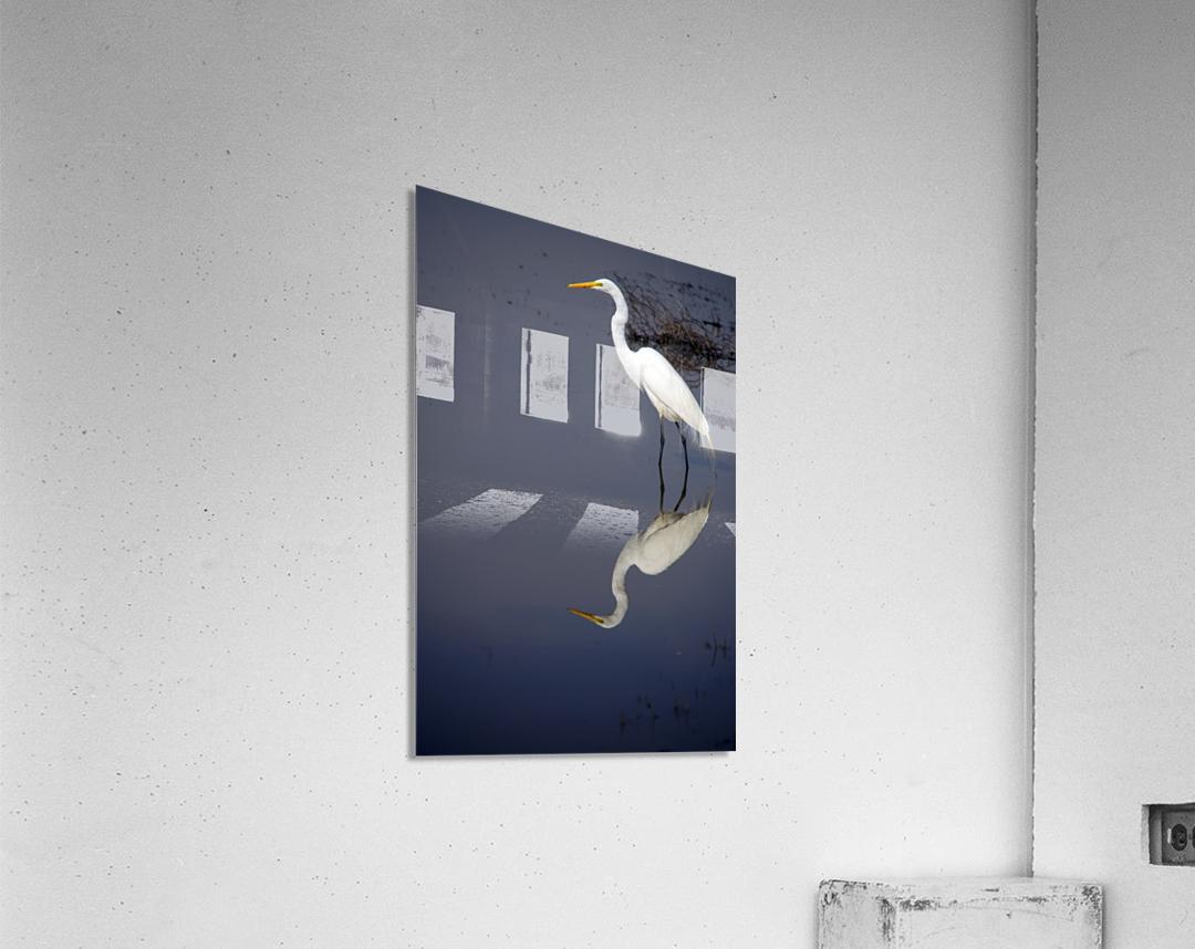 White Egret Reflection  Acrylic Print
