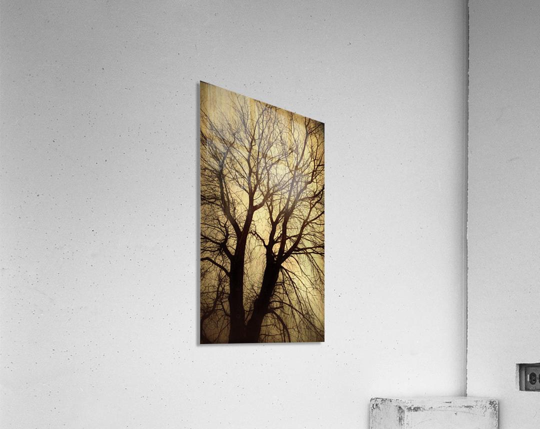 Ramifications  Acrylic Print